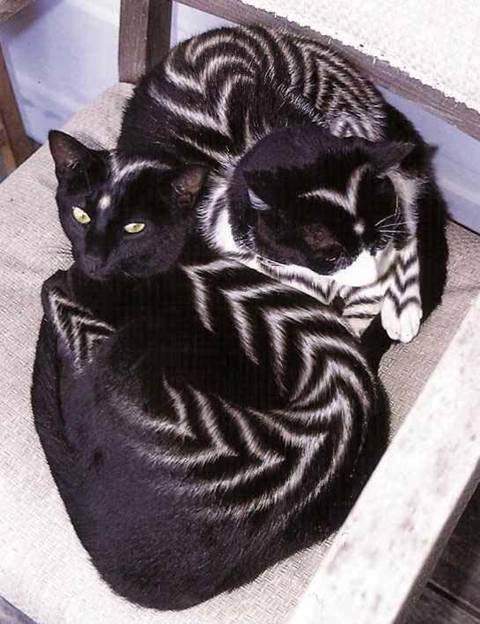 Крашенные коты