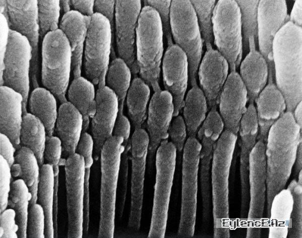 İnsan Bədəninin Dərinliklərindən Mikro - Təsvir