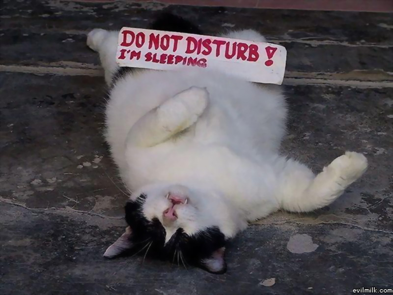 Im sleeping